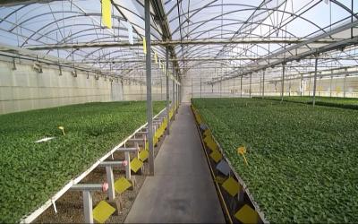 30 Millones de Plantas Suministradas en Cada Campaña